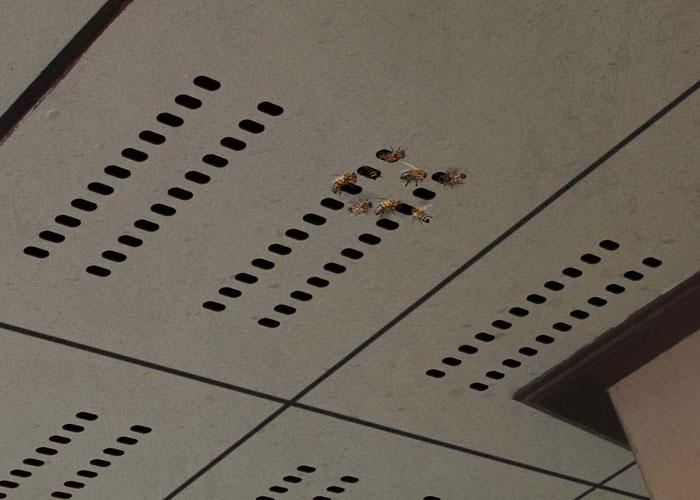 ลดร้อน กันแมลง ด้วยฝ้าระบายอากาศพร้อมตาข่ายสำเร็จรูป