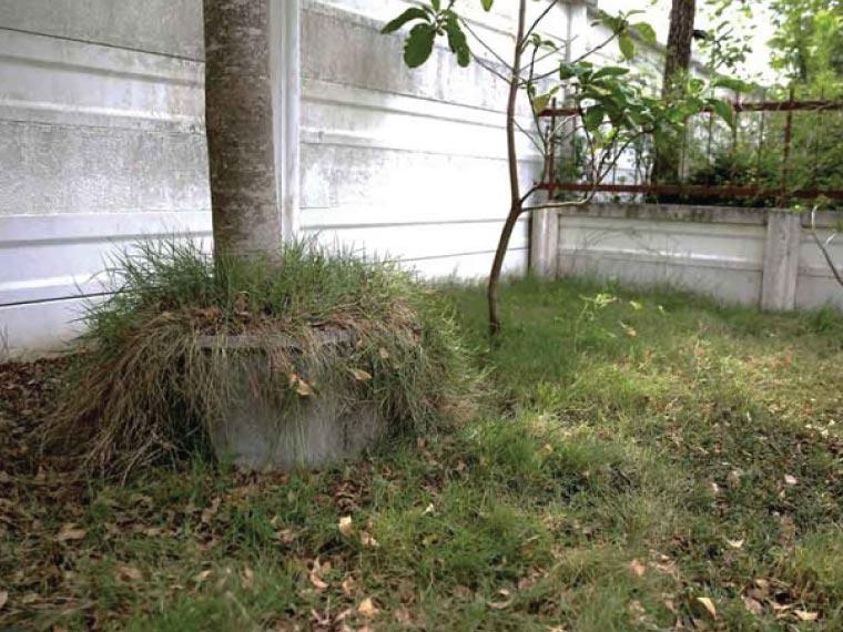 ไอเดียแต่งสวนหน้าบ้าน เปลี่ยนพื้นที่รกร้างให้มีชีวิตชีวา 2