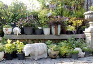 จัดสวนหน้าบ้านสไตล์ยุโรป สวนสวยสำหรับบ้านพื้นที่น้อย Cottage Garden