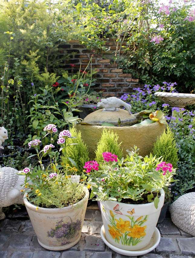 จัดสวนหน้าบ้านสไตล์ยุโรป สวนสวยสำหรับบ้านพื้นที่น้อย Cottage Garden 1