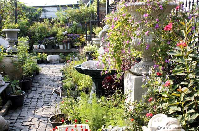จัดสวนหน้าบ้านสไตล์ยุโรป สวนสวยสำหรับบ้านพื้นที่น้อย Cottage Garden 2
