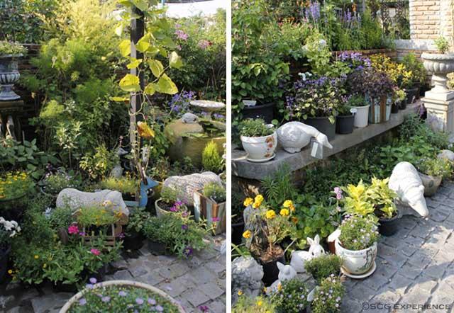 จัดสวนหน้าบ้านสไตล์ยุโรป สวนสวยสำหรับบ้านพื้นที่น้อย Cottage Garden 3