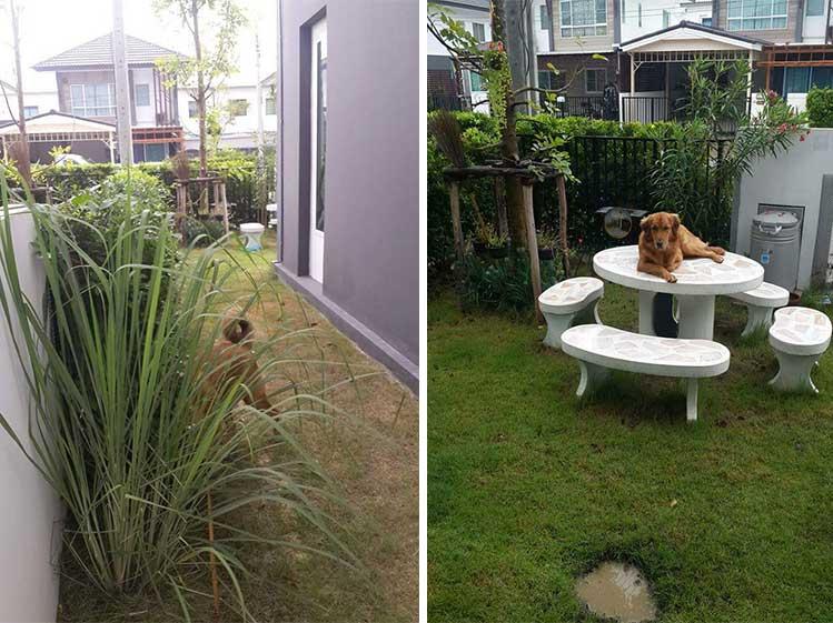 ไอเดียจัดสวนสวยให้ลงตัวกับทั้งเจ้าของบ้านและสัตว์เลี้ยงที่รัก 1