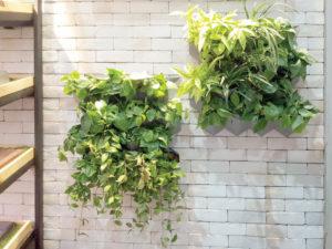 5 ขั้นตอน ติดตั้งสวนแนวตั้ง SCG Modular Green Hive ชุด DIY