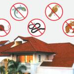 10 ช่องต้องปิด ป้องกันสัตว์เข้าบ้าน